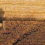 Estado ganha primeiro hub agro com iniciativa da AnLab, Tecnopuc e Ventiur